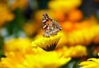 butterfly-169924_1280