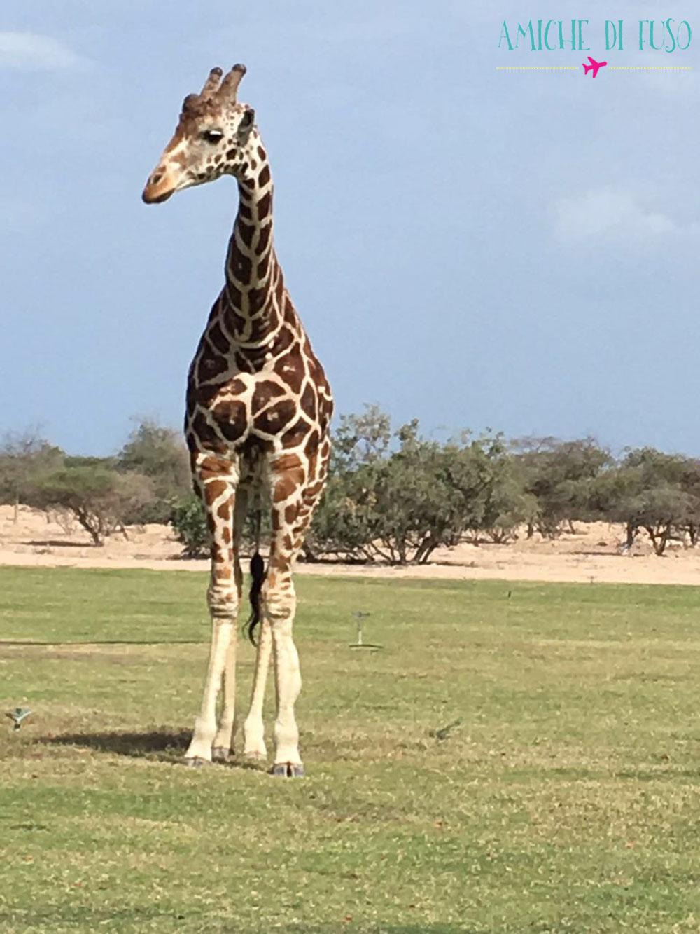 safari1