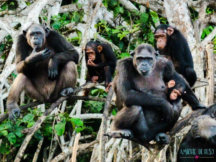Vivere in Congo - Amiche di Fuso -