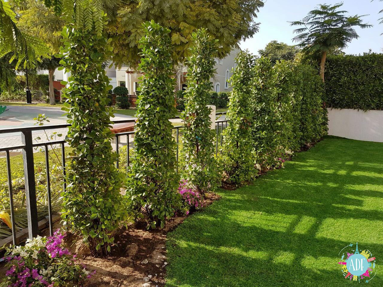 Il giardino e le piante in Dubai - Amiche di Fuso