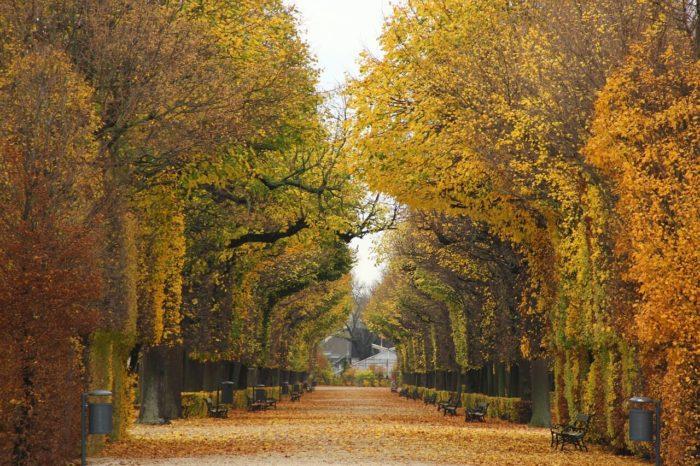2. Vienna Verde