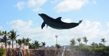 Bahamas_AmichediFuso_Nadja