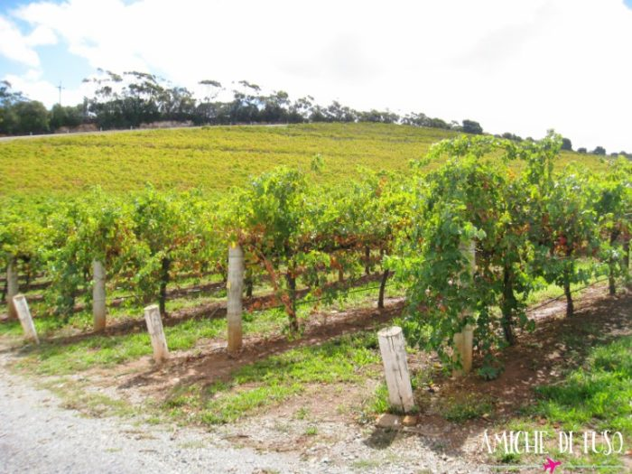hunter valley - amiche di fuso