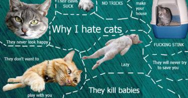 odio i gatti